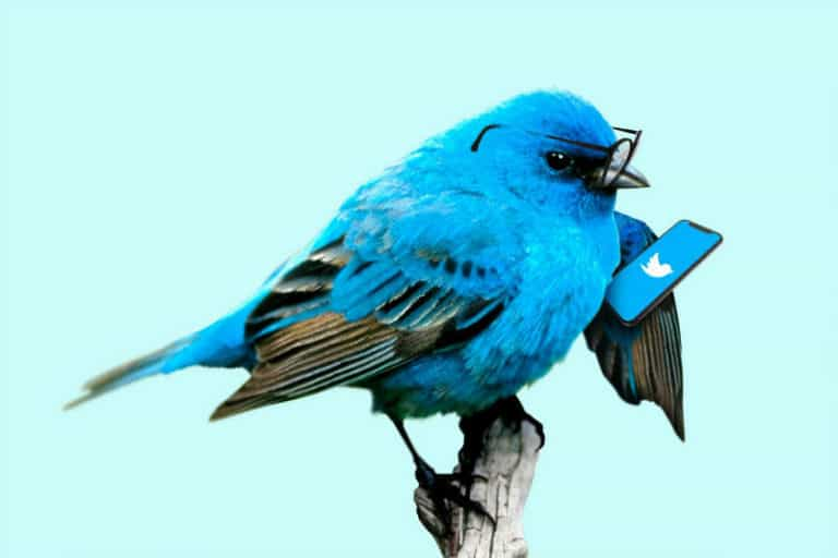 How to Fix Twitter Video Quality